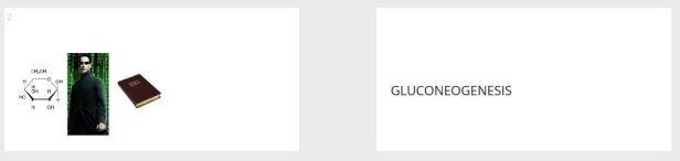 glucneogensis